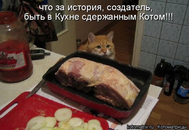 Котоматрица: что за история, создатель,  быть в Кухне сдержанным Котом!!!