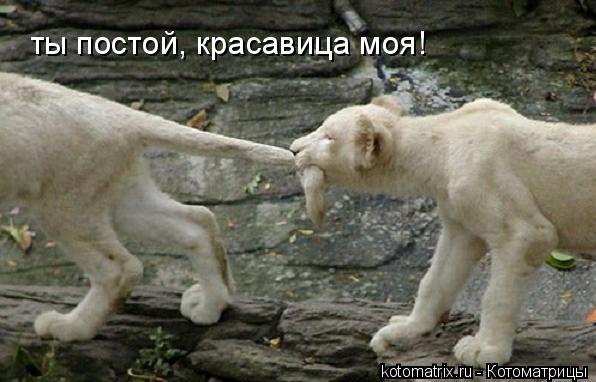 Котоматрица: ты постой, красавица моя!