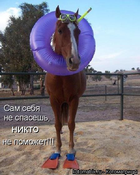 Котоматрица: Сам себя не спасешь,   никто  не поможет!!!