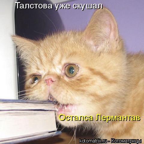 Котоматрица: Талстова уже скушал  Осталса Лермантав