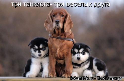 Котоматрица: три танкиста- три веселых друга