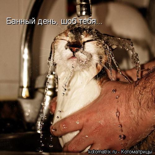 Котоматрица: Банный день, шоб тебя...
