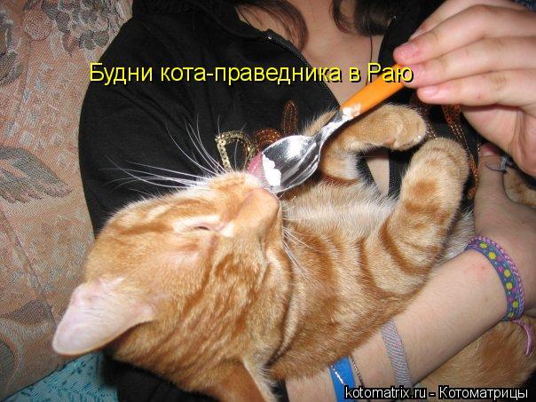 Котоматрица: Будни кота-праведника в Раю
