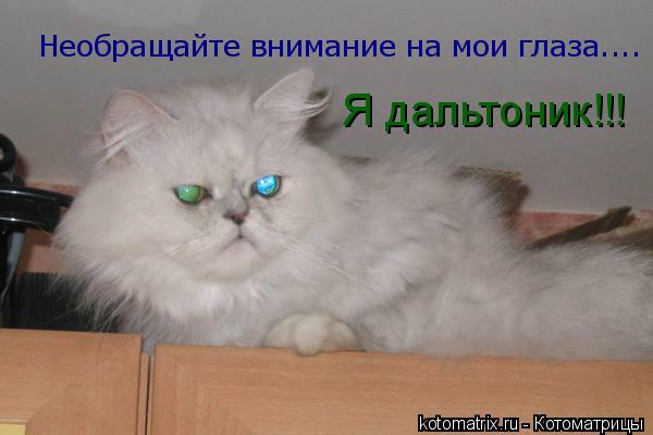 Котоматрица: Необращайте внимание на мои глаза.... Я дальтоник!!!