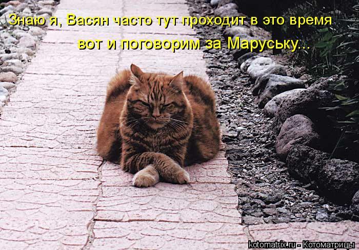 Котоматрица: Знаю я, Васян часто тут проходит в это время вот и поговорим за Маруську...