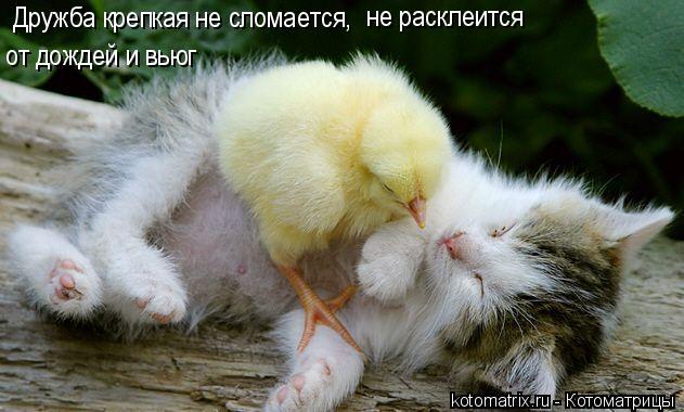 Котоматрица: Дружба крепкая не сломается,  не расклеится от дождей и вьюг