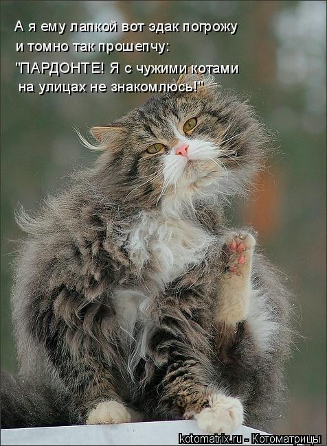 """Котоматрица: А я ему лапкой вот эдак погрожу и томно так прошепчу: """"ПАРДОНТЕ! Я с чужими котами на улицах не знакомлюсь!"""""""