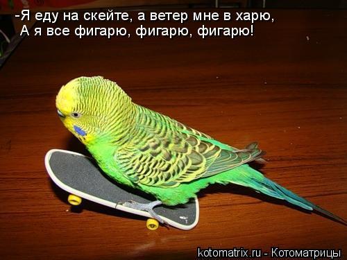 Котоматрица: -Я еду на скейте, а ветер мне в харю, А я все фигарю, фигарю, фигарю!