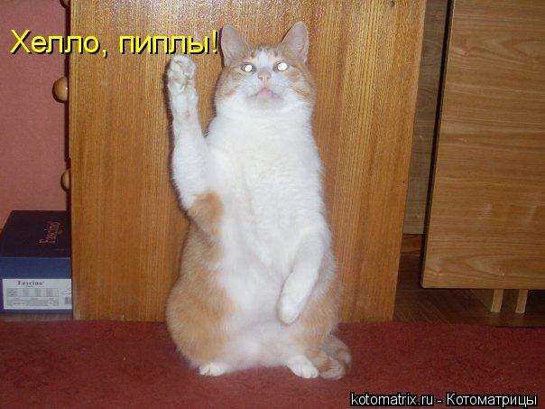 Котоматрица: Хелло, пиплы!