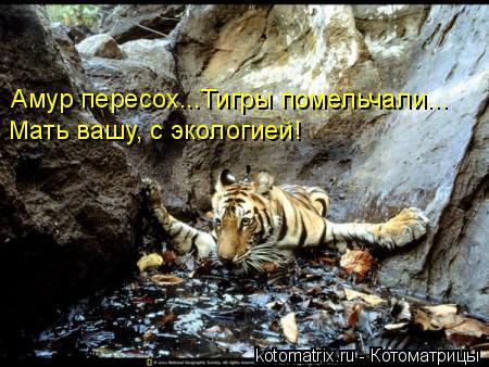 Котоматрица: Амур пересох...Тигры помельчали... Мать вашу, с экологией!