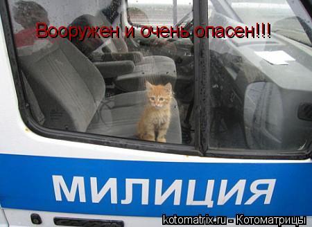 Котоматрица: Вооружен и очень опасен!!!