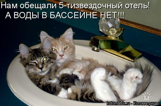 Котоматрица: Нам обещали 5-тизвездочный отель! А ВОДЫ В БАССЕЙНЕ НЕТ!!!