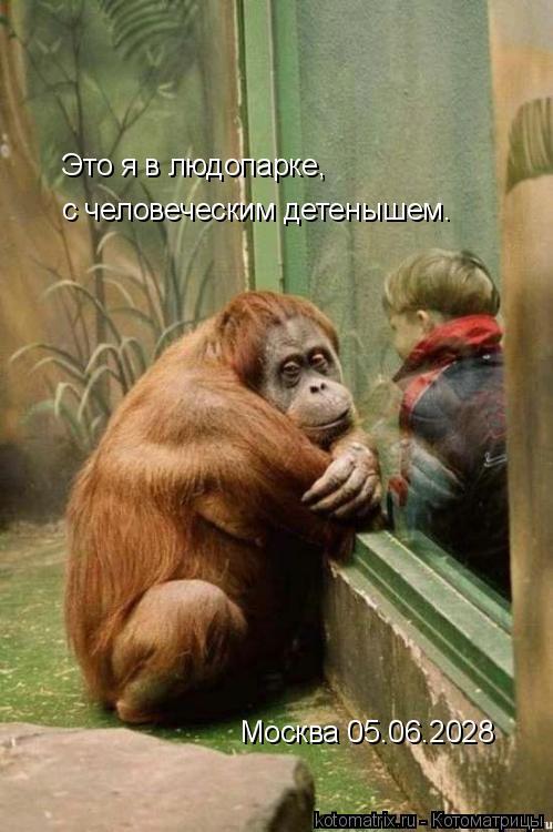 Котоматрица: Это я в людопарке, с человеческим детенышем. Москва 05.06.2028