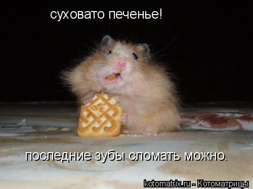 Котоматрица: суховато печенье! последние зубы сломать можно.