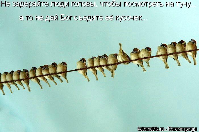 Котоматрица: Не задерайте люди головы, чтобы посмотреть на тучу... а то не дай Бог съедите её кусочек...