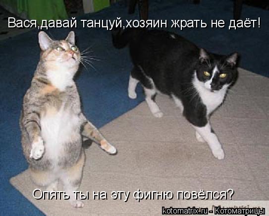 Котоматрица: Вася,давай танцуй,хозяин жрать не даёт! Опять ты на эту фигню повёлся?