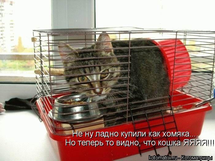 Котоматрица: Не ну ладно купили как хомяка.... Но теперь то видно, что кошка ЯЯЯЯ!!!!