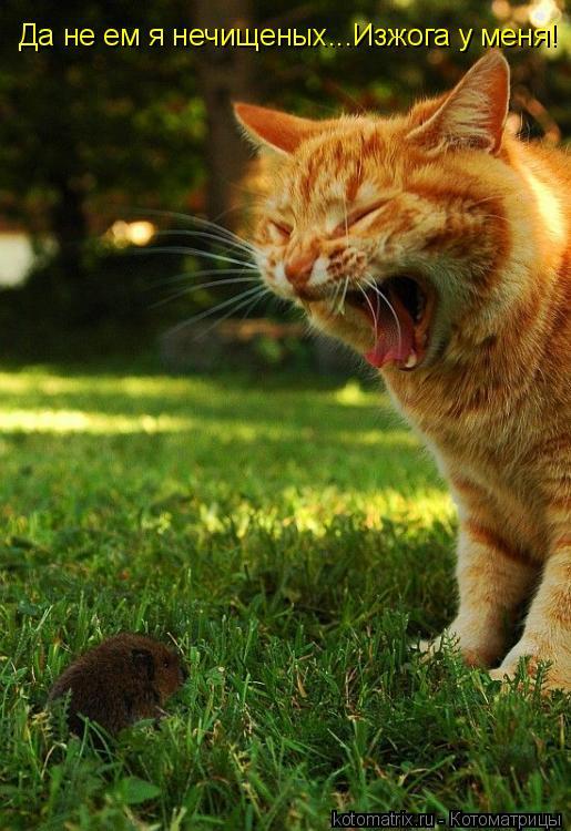 Котоматрица: Да не ем я нечищеных...Изжога у меня!