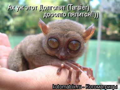 Котоматрица: Ах уж этот Долгопят (Tarsier)  дооолго пялится!!))