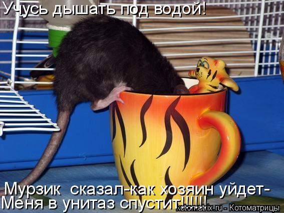 Котоматрица: Учусь дышать под водой! Мурзик  сказал-как хозяин уйдет- Меня в унитаз спустит!!!!!!