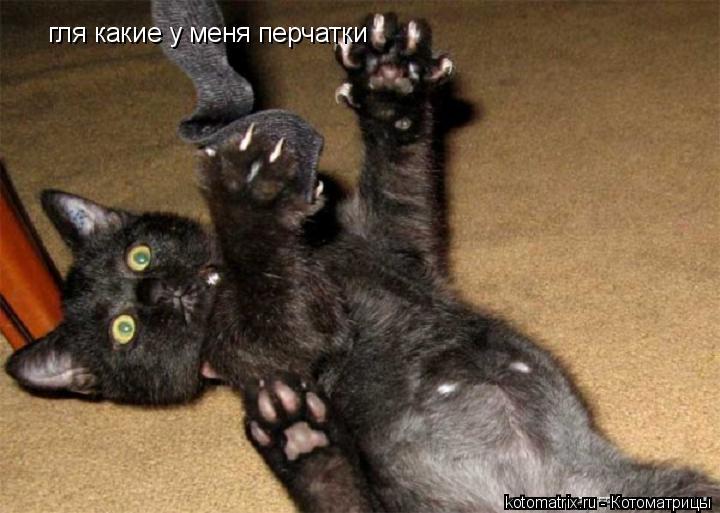 Котоматрица: гля какие у меня перчатки