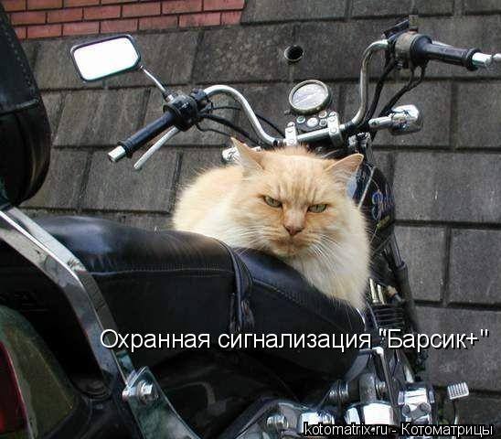 "Котоматрица: Охранная сигнализация ""Барсик+"""