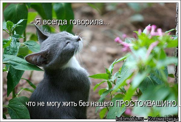 Котоматрица: - Я всегда говорила... ... что не могу жить без нашего ПРОСТОКВАШИНО...