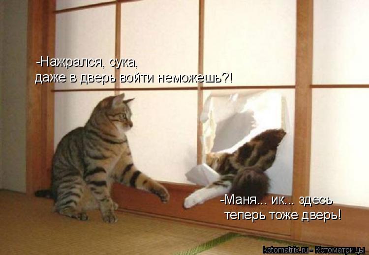 Котоматрица: -Нажрался, сука, даже в дверь войти неможешь?! -Маня... ик... здесь теперь тоже дверь!