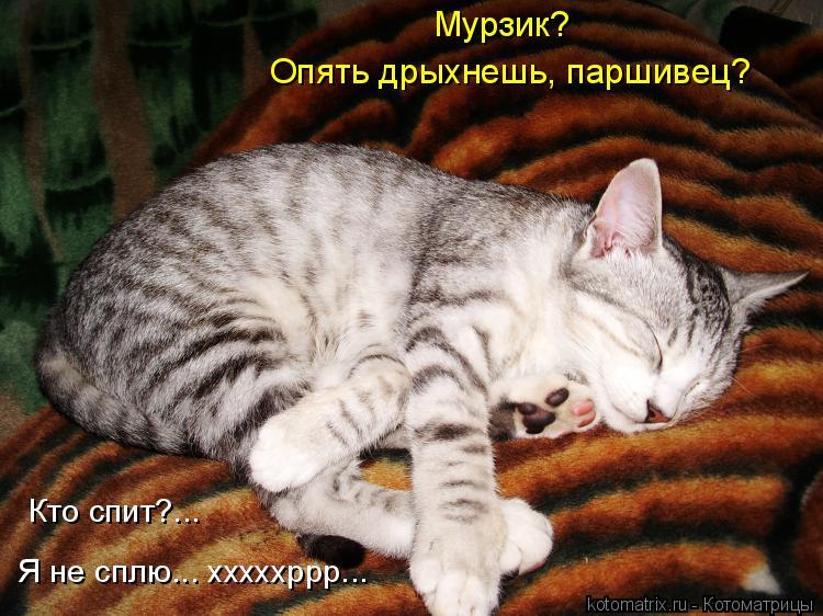 Котоматрица: Кто спит?... Я не сплю... хххххррр... Мурзик? Опять дрыхнешь, паршивец?