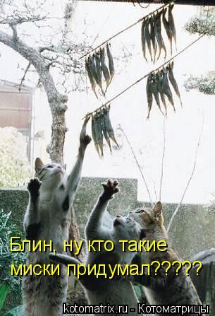 Котоматрица: Блин, ну кто такие  миски придумал?????