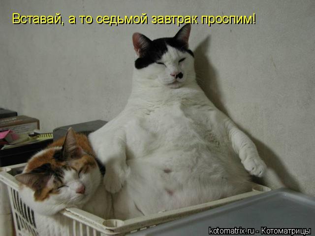 Котоматрица: Вставай, а то седьмой завтрак проспим!
