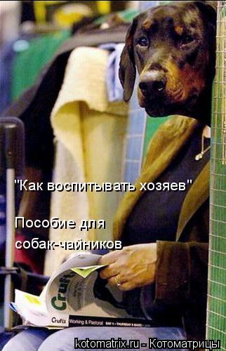 """Котоматрица: собак-чайников Пособие для  """"Как воспитывать хозяев"""""""