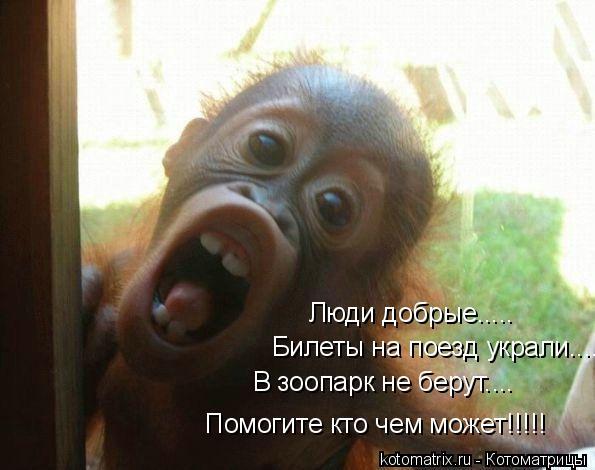 Котоматрица: Люди добрые..... Билеты на поезд украли.... В зоопарк не берут.... Помогите кто чем может!!!!!