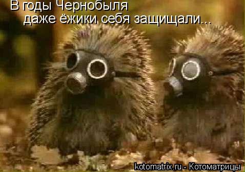 Котоматрица: В годы Чернобыля даже ёжики себя защищали...