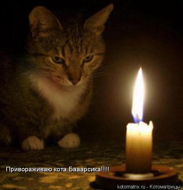 Котоматрица: Привораживаю кота Бааарсика!!!!