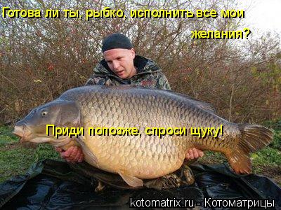 Котоматрица: Готова ли ты, рыбко, исполнить все мои желания?  Приди попозже, спроси щуку!