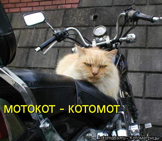 Котоматрица: мотокот - котомот