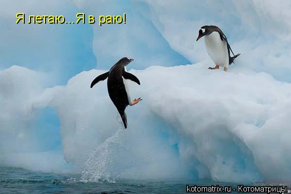 Котоматрица: Я летаю...Я в раю!