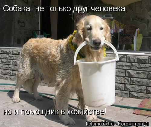 Котоматрица: Собака- не только друг человека, но и помощник в хозяйстве!