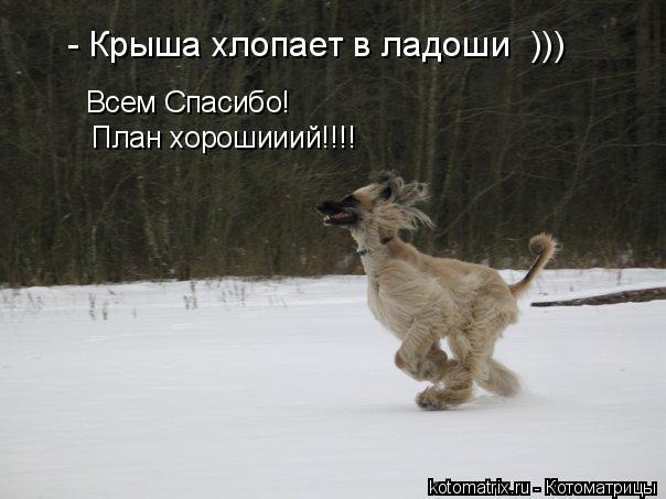 Котоматрица: - Крыша хлопает в ладоши  ))) Всем Спасибо! План хорошииий!!!!