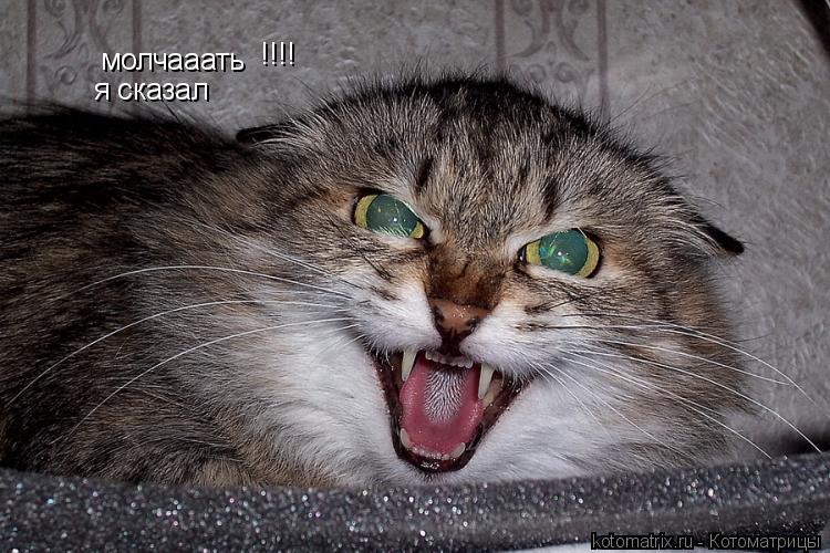 Котоматрица: молчааать я сказал !!!!