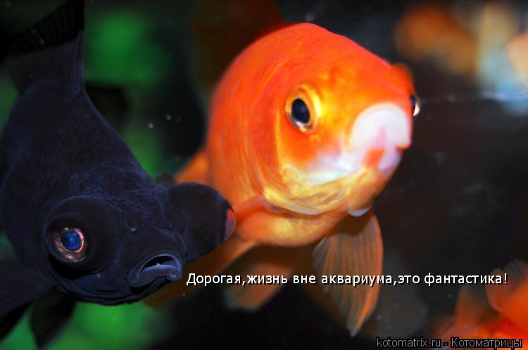 Котоматрица: Дорогая,жизнь вне аквариума,это фантастика!