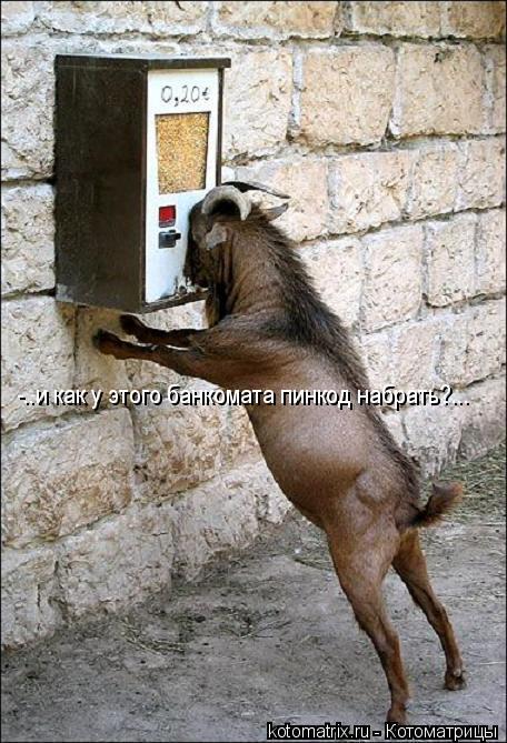 Котоматрица: -..и как у этого банкомата пинкод набрать?...