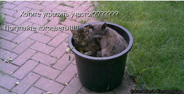 Котоматрица: Хотите украсить участок??????? Покупайте котоцветы!!!!!