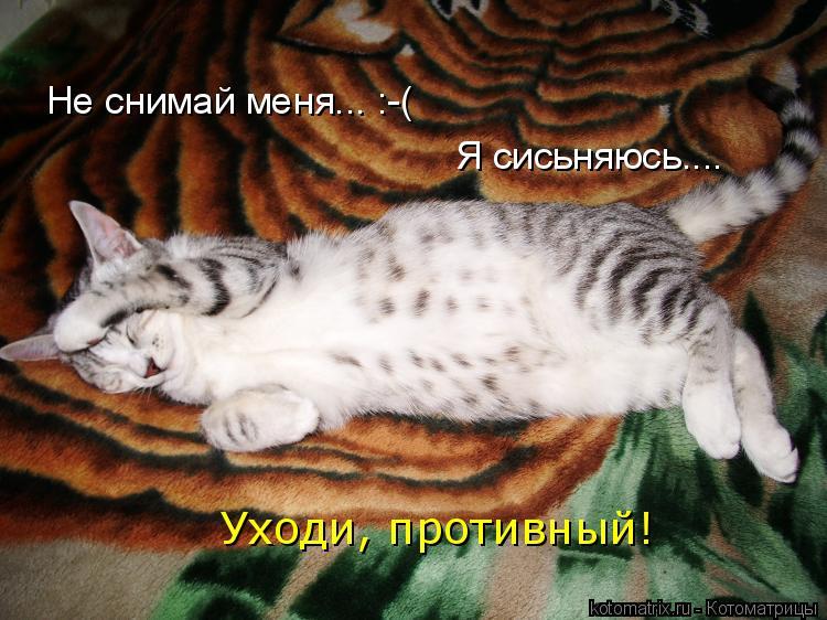 Котоматрица: Не снимай меня... :-( Я сисьняюсь.... Уходи, противный!