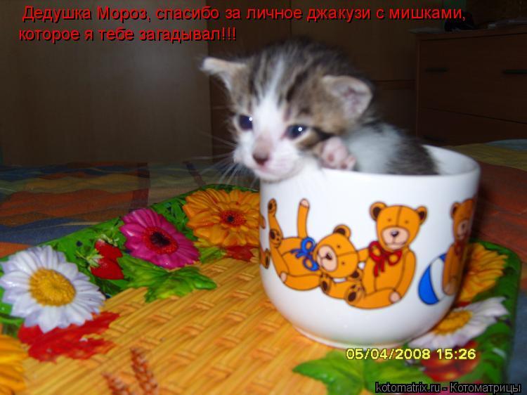 Котоматрица: Дедушка Мороз, спасибо за личное джакузи с мишками,  которое я тебе загадывал!!!