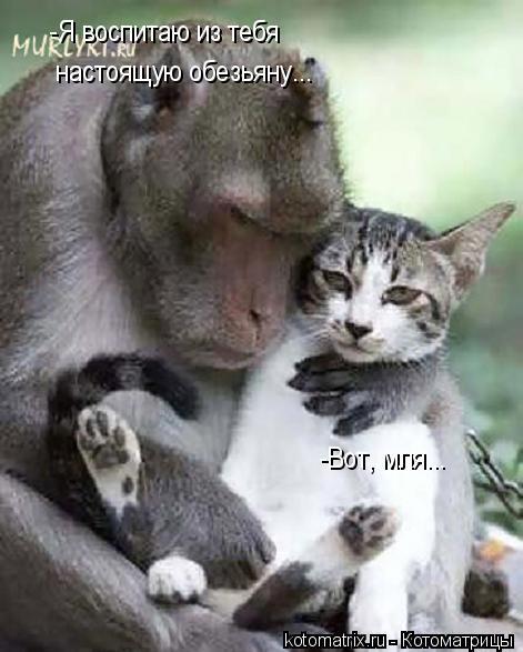 Котоматрица: -Я воспитаю из тебя настоящую обезьяну... -Вот, мля...