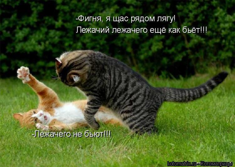 Котоматрица: -Лежачего не бьют!!! -Фигня, я щас рядом лягу! Лежачий лежачего ещё как бьёт!!!