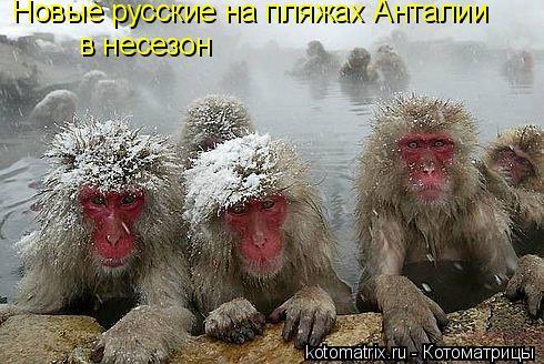 Котоматрица: Новые русские на пляжах Анталии  в несезон