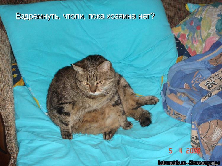Котоматрица: Вздремнуть, чтоли, пока хозяина нет?